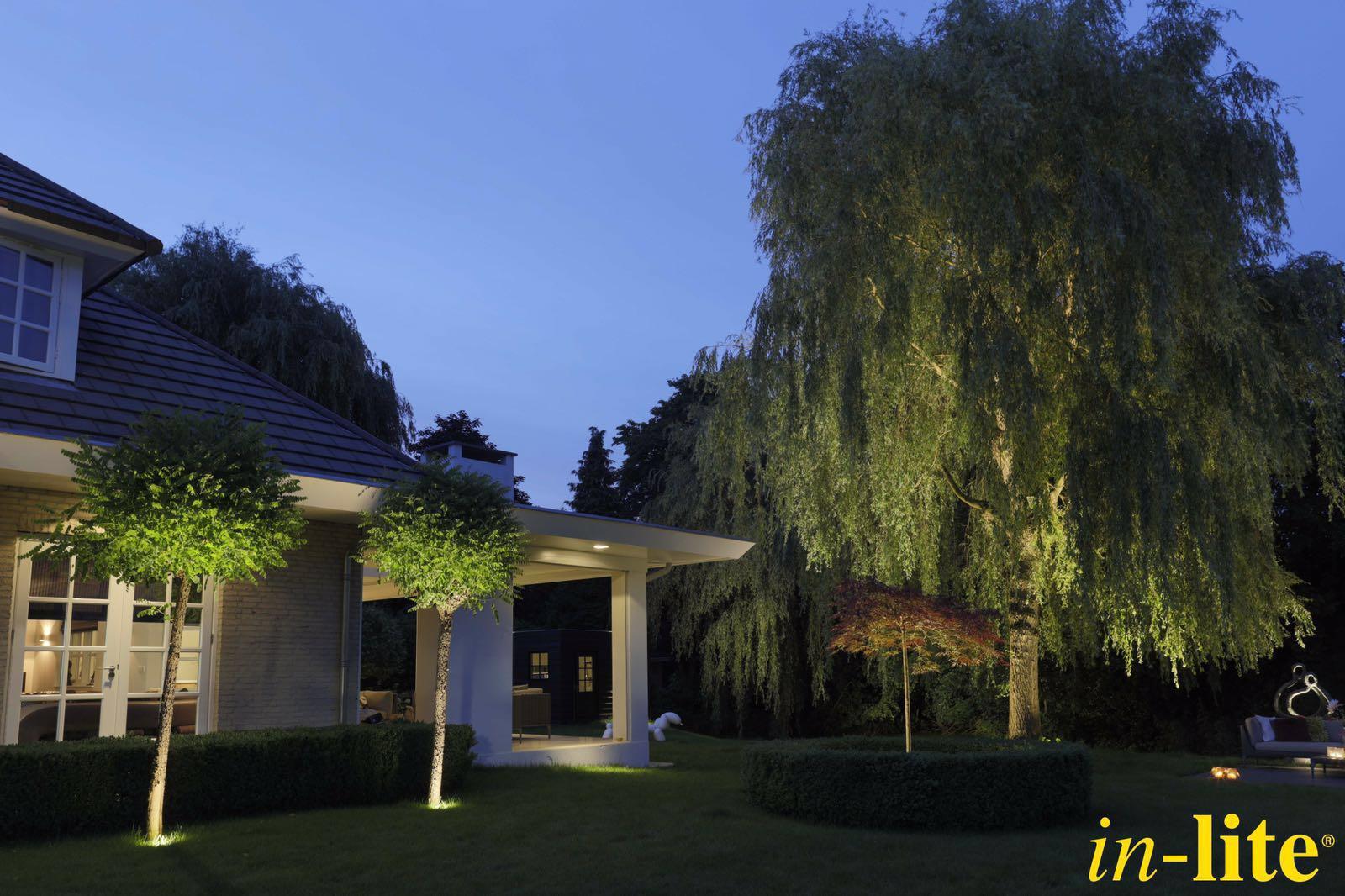 perfect uitgelichte bomen in lite verlichting